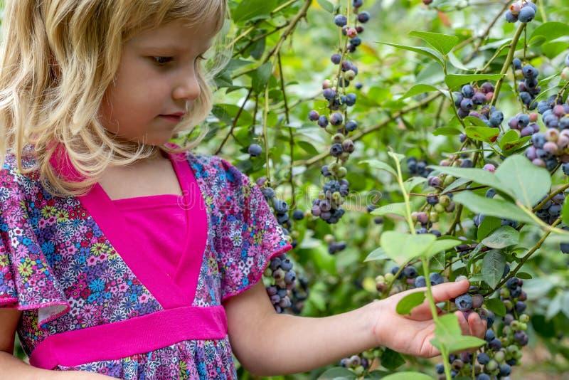 Młodej dziewczyny zrywania czarne jagody 01 zdjęcia royalty free