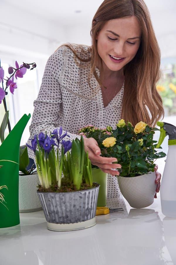 Młodej Kobiety czułość Dla Houseplants Indoors fotografia stock