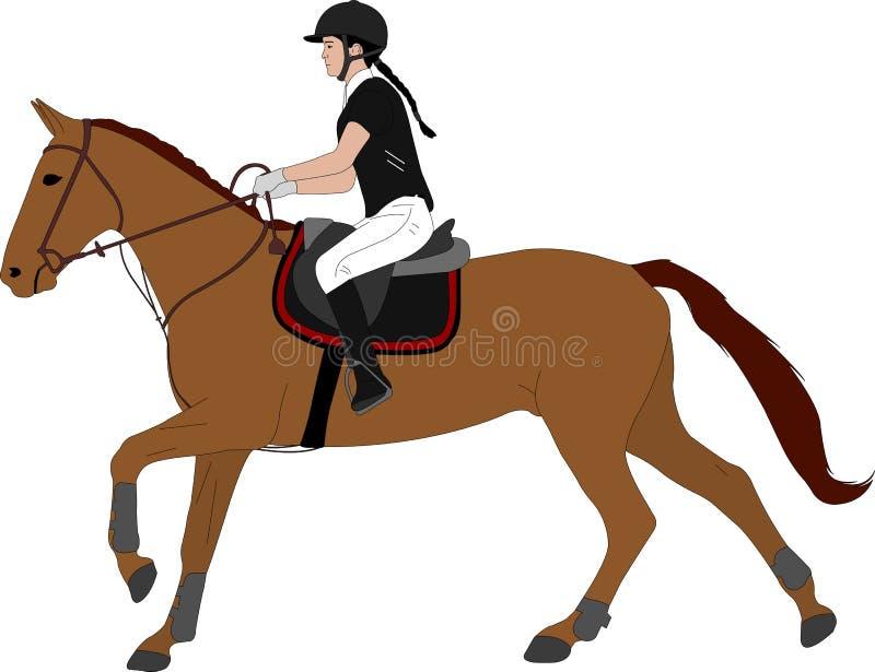 Młodej kobiety horsecolor jeździecka ilustracja dressage equestrian ko?scy konie target491_1_ polo je?dz?w sylwetki bawj? si? wek royalty ilustracja