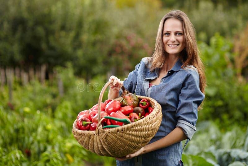 Młodej kobiety ogrodniczka trzyma kosz czerwona papryka pełno zdjęcie royalty free