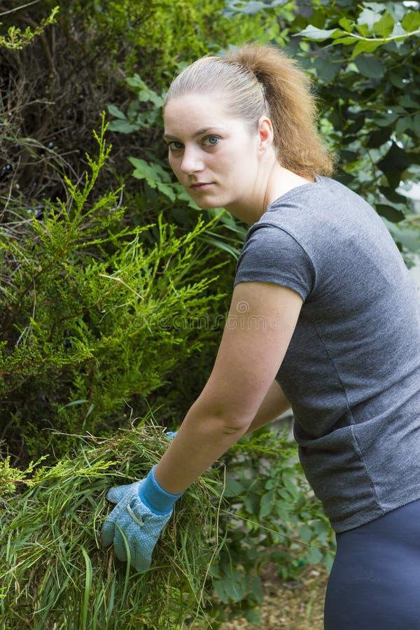 Młodej kobiety zbieracka trawa w ogródzie fotografia stock