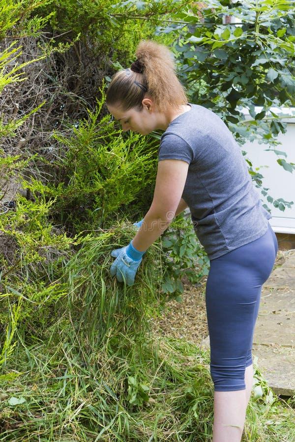 Młodej kobiety zbieracka trawa w ogródzie obraz royalty free
