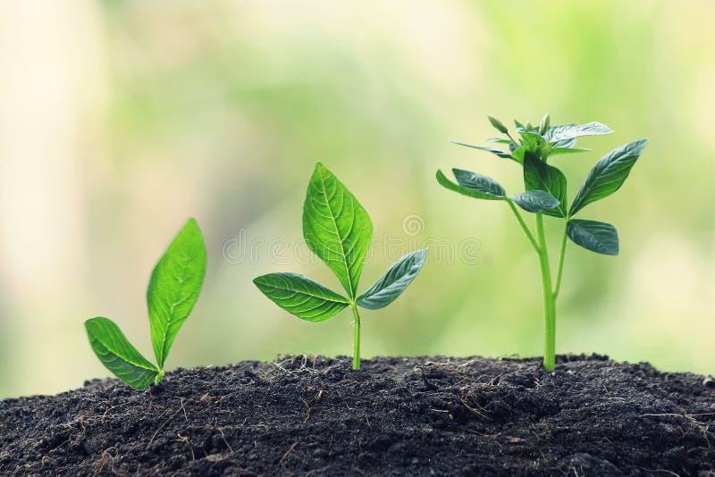 Młodej rośliny dorośnięcie W świetle słonecznym zdjęcia stock