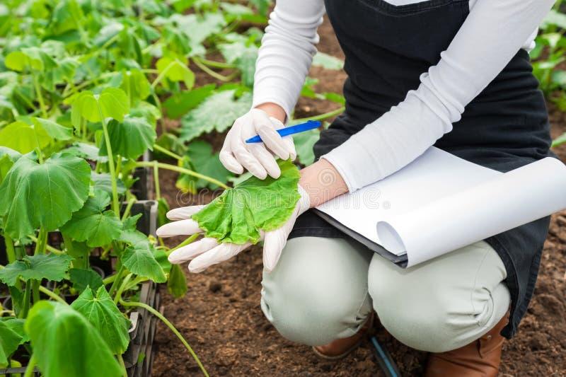 Młody żeński rolnictwo inżynier sprawdza rośliny fotografia stock