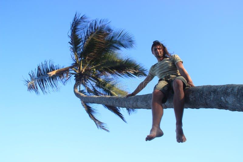 Młody biały człowiek wspinający się na drzewku palmowym i siedzi na bagażniku wśród jaskrawej palmy i niebieskiego nieba obrazy stock