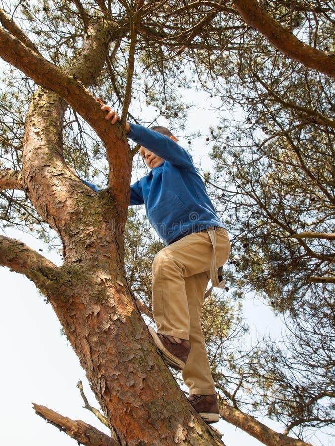 Młody chłopiec pięcie w drzewie obraz royalty free