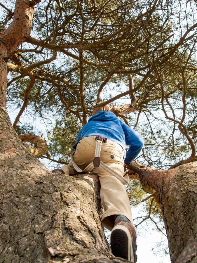 Młody chłopiec pięcie w drzewie zdjęcia stock