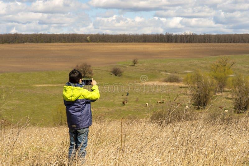 Młody chłopiec robi zdjęcia krów wypasanych na łące na telefonach komórkowych wczesną wiosną obrazy royalty free