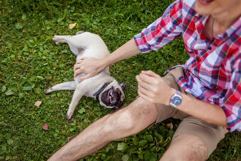 Młody człowiek bawić się z mopsa psa obsiadaniem na trawie Szczęśliwy szczeniak ma zabawę z mistrzem zdjęcie stock