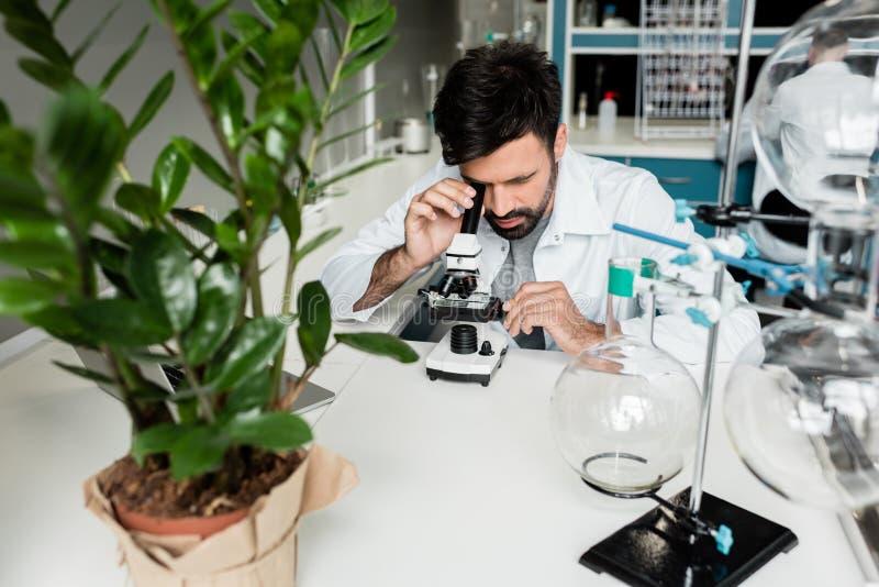 Młody fachowy naukowiec pracuje z mikroskopem w chemicznym lab zdjęcia royalty free
