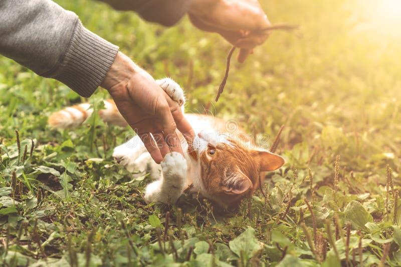 Młody figlarnie kot gryźć rękę mężczyzna zdjęcie stock