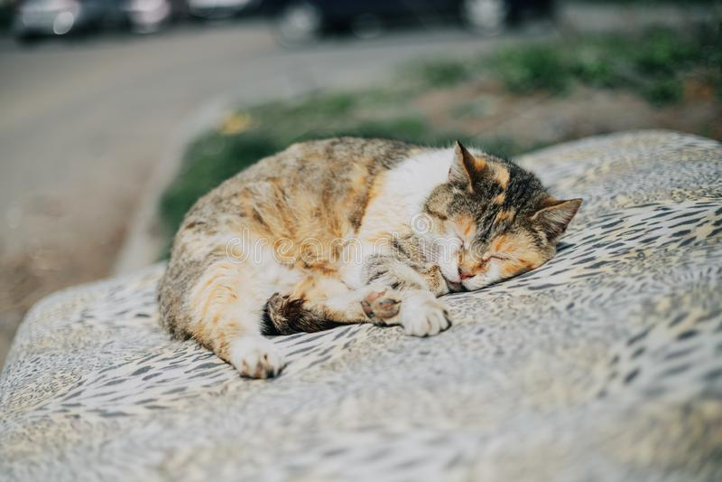 Młody gnuśny kot kłaść na ona z powrotem patrzejący w kamerę fotografia royalty free