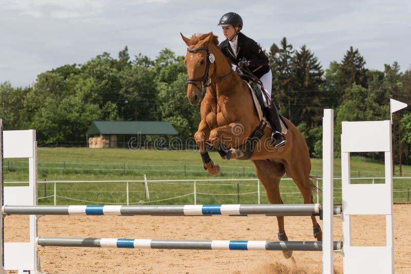 Młody horsewoman skacze nad przeszkodą zdjęcie stock