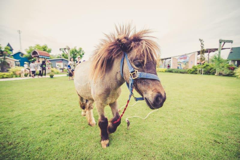 Młody koń w polu fotografia royalty free