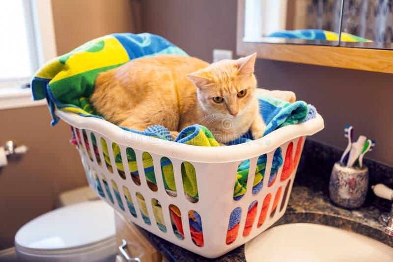 Młody kot obrazy royalty free