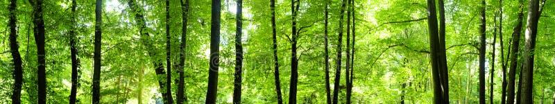 Młody las zdjęcia stock