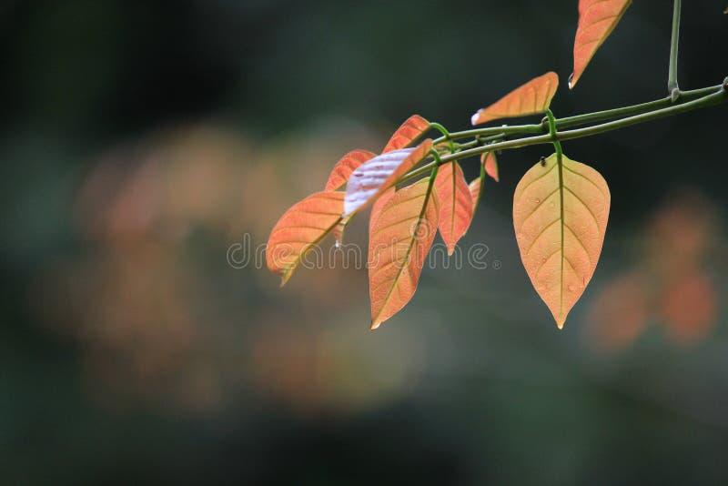 Młody liści skakać up dla wiosna sezonu obraz royalty free