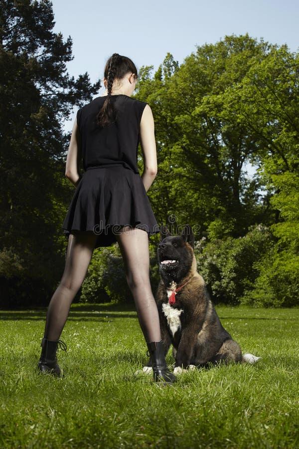 Młody męski szczeniak amerykanina Akita pies trenował jego właścicielem zdjęcia royalty free