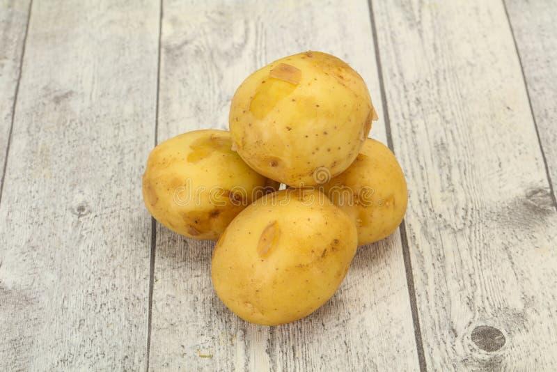 Młody mały sezonowy kartoflany rozsypisko zdjęcia royalty free
