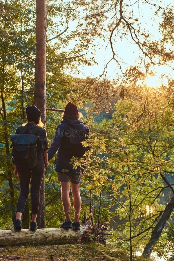 Młody modniś pary mienie wręcza pozycję na bagażniku w pięknym lesie przy zmierzchem Podróż, turystyka i podwyżka, obrazy stock