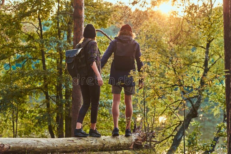 Młody modniś pary mienie wręcza pozycję na drzewnym bagażniku w pięknym lesie przy zmierzchem Podróż, turystyka i podwyżka, obraz stock