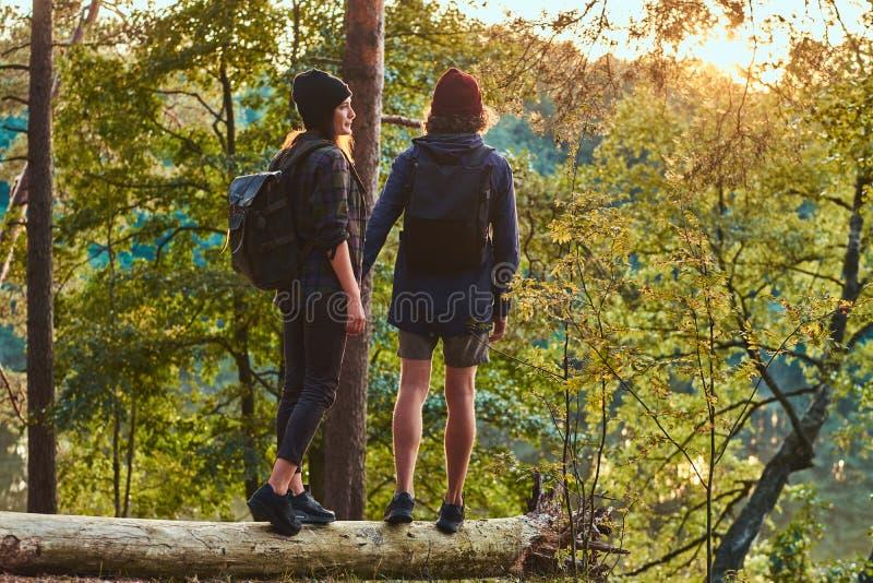 Młody modniś pary mienie wręcza pozycję na drzewnym bagażniku w pięknym lesie przy zmierzchem Podróż, turystyka i podwyżka, obraz royalty free