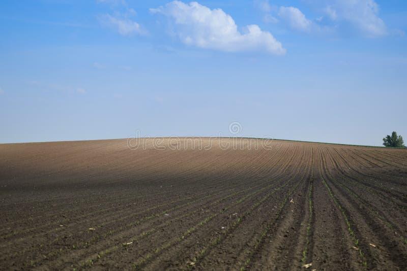 Młody pszeniczny pole na wzgórzu z cieniami fotografia royalty free