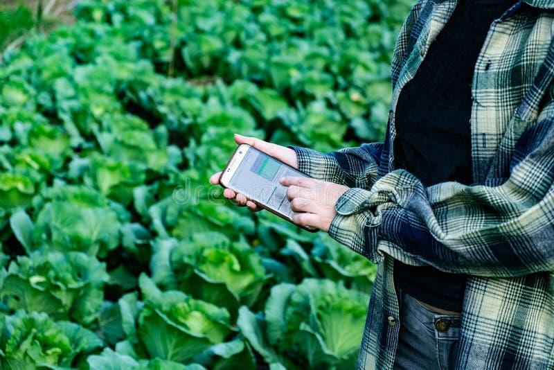 Młody rolnik obserwuje niektóre map warzywa segregującego w telefonie komórkowym, Eco organicznie mądrze gospodarstwo rolne 4 (0) zdjęcie stock