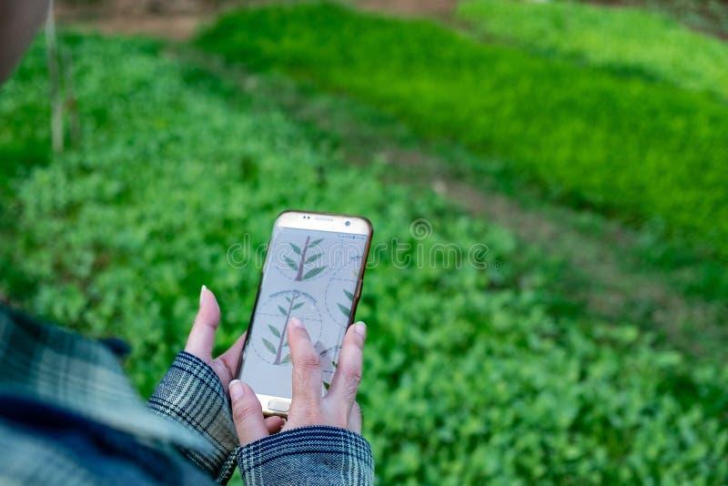 Młody rolnik obserwuje niektóre map warzywa segregującego w telefonie komórkowym, Eco organicznie mądrze gospodarstwo rolne 4 (0) zdjęcia royalty free