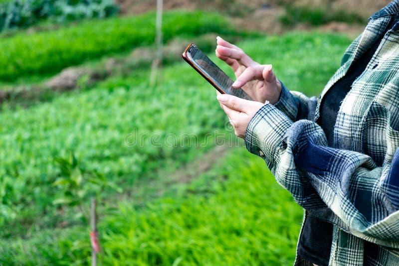 Młody rolnik obserwuje niektóre map warzywa segregującego w telefonie komórkowym, Eco organicznie nowożytny mądrze gospodarstwo r zdjęcia royalty free
