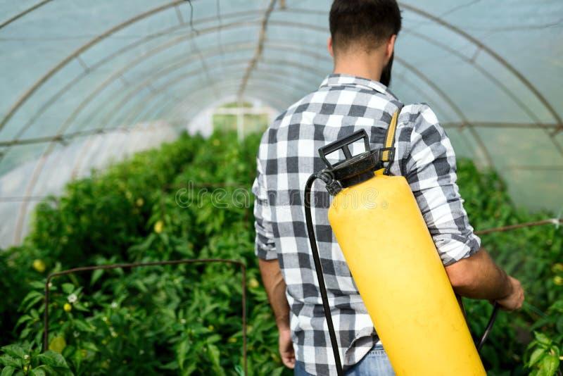 Młody rolnik ochrania jego rośliny obrazy royalty free