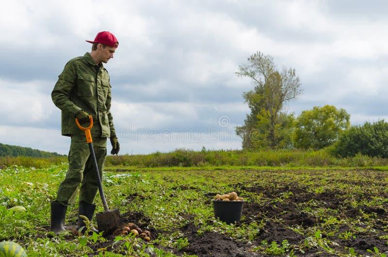 Młody rolnik zbiera grule obraz royalty free