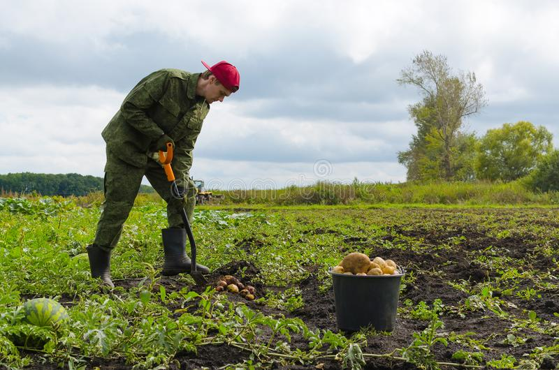 Młody rolnik zbiera grule obrazy stock