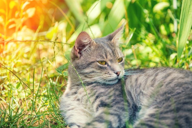 M?ody szary kota lying on the beach w ogr?dzie zdjęcie stock