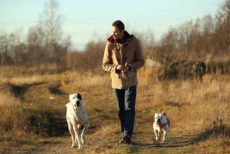 Młody szczęśliwy europejski uśmiechnięty i roześmiany odprowadzenie w polu z dwa psami obrazy stock