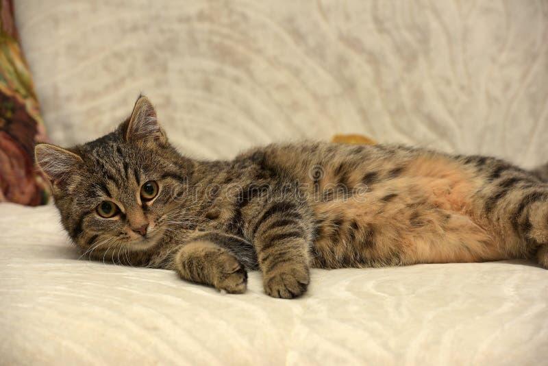Młody tabby kot zdjęcia stock