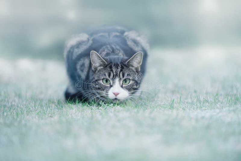 Młody Tabby kot na mrozie zdjęcie stock