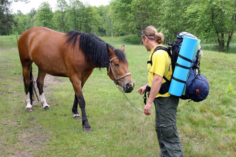 Młody turysta z plecakiem zaznajamiającym z koniem i obraz royalty free