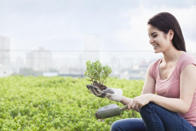 Młody uśmiechnięty kobiety ogrodnictwo, mienie i roślina w dachowym wierzchołku uprawia ogródek w mieście obrazy stock