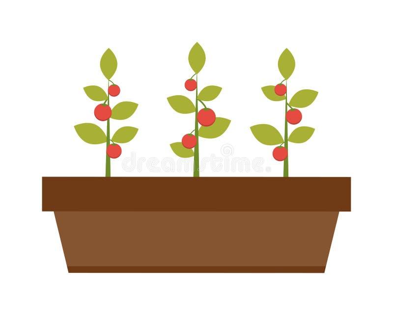Młody zielonej rośliny rozsadowy dorośnięcie w glebowym płaskim wektorze ilustracji