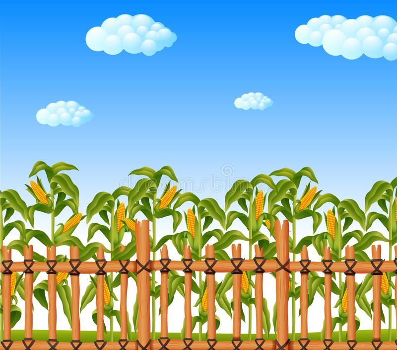 Młody zielony kukurydzany pole w rolniczym ogródzie ilustracja wektor