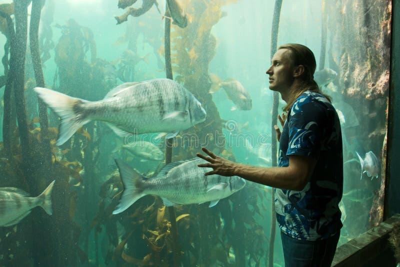 Młodych człowieków spojrzenia przy rybim zbiornikiem zdjęcia royalty free