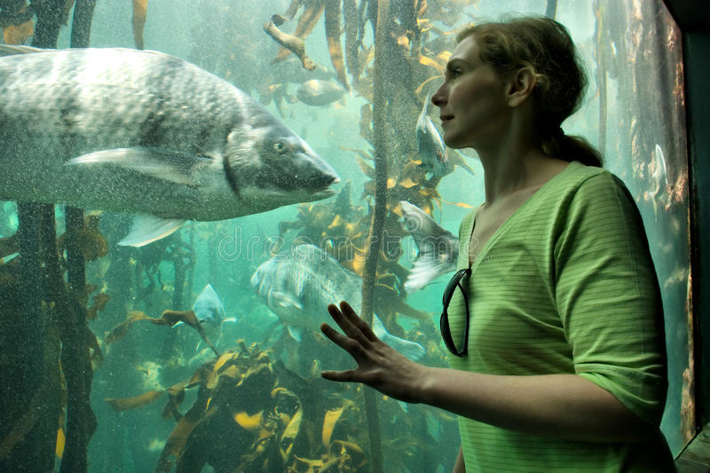 Młodych kobiet spojrzenia przy dużą ryba obrazy stock