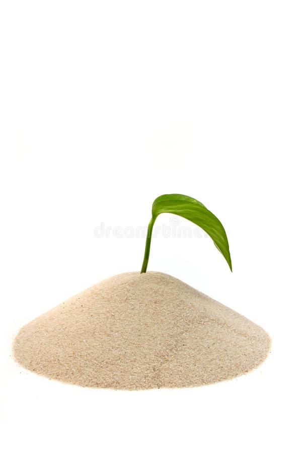 młodych roślin obraz stock