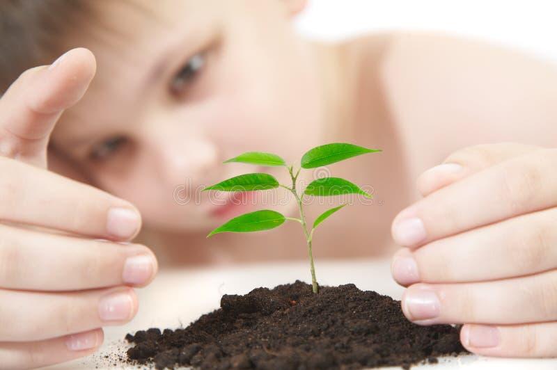 młodych roślin zdjęcia royalty free