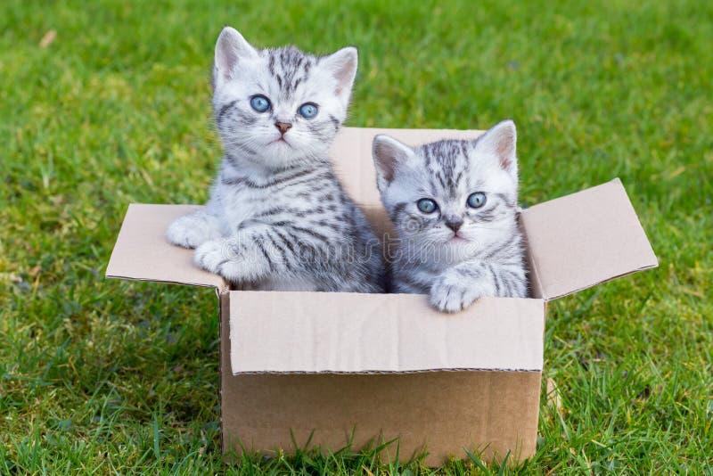 Młodzi koty w kartonie na trawie obraz stock