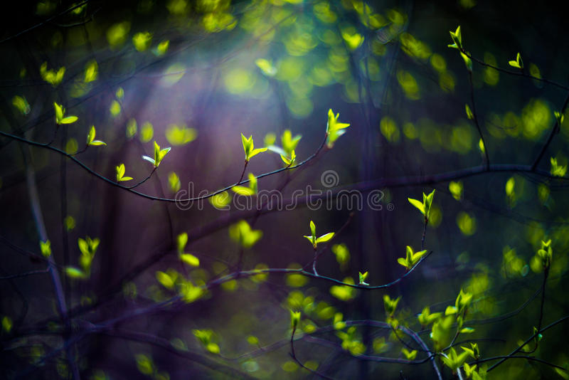 Młodzi liście zdjęcie royalty free