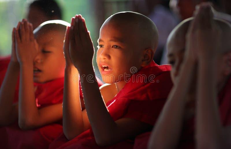Młodzi modlenie nowicjuszi, Myanmar zdjęcia royalty free