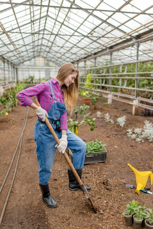 Młodzi piękni kobiety replanting kwiaty obraz stock