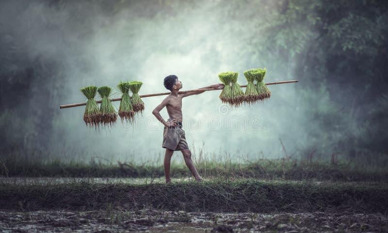 Młodzi rolnicy uprawiają ryż w porze deszczowej obrazy royalty free